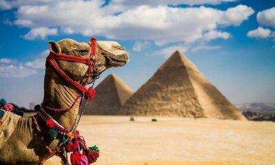 Герд Мюллер призвал главу МИД ФРГ пересмотреть ограничения на поездки в страныАфрики - Фото