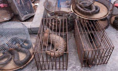 Вьетнам запретил торговлю всеми видами диких животных - Фото
