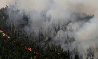 В Хорватии пожар охватил около 40 гектаров леса - Фото