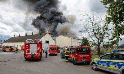В Германии на ферме заживо сгорели 5 тысяч свиней - Фото