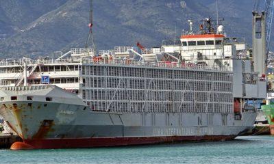 В Восточно-Китайском море потерпело крушение судно с 6 тысячами коров на борту - Фото