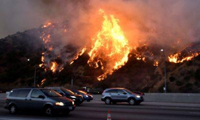 Уже 26 человек стали жертвами лесных пожаров в США - Фото