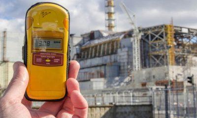 Ученые: Уровень радиации в Чернобыле опасен для пчел - Фото