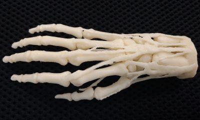 Ученые разработали технологию 3D-печати костеподобных частей с живыми клетками - Фото