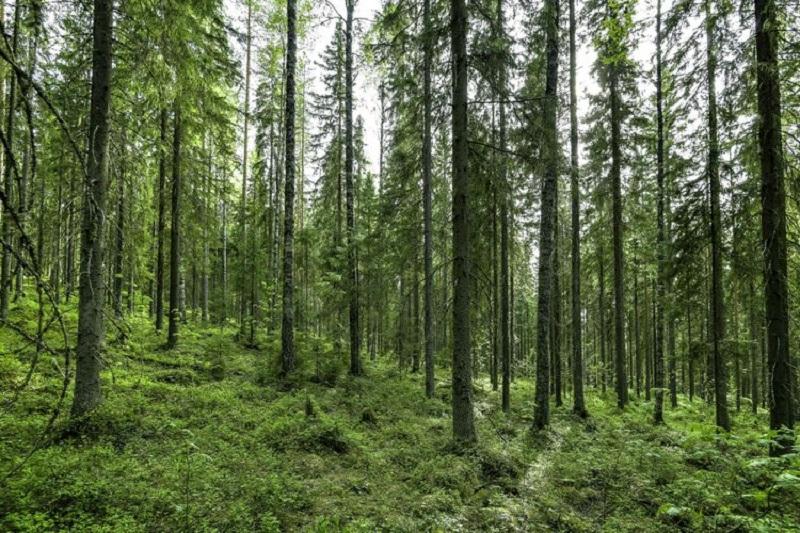 Ученые: в течение нескольких десятилетий растения могут превратиться в источники углерода - Фото