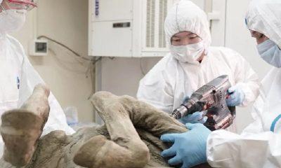 Российские ученые начали исследовать доисторические вирусы извлеченные из вечной мерзлоты - Фото