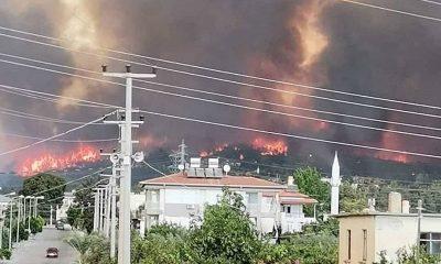 В Турции лесные пожары не утихают 4-й день - Фото