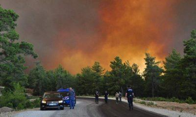 Президент Турции Эрдоган заявил об аресте подозреваемого вподжоге лесов наюге страны - Фото