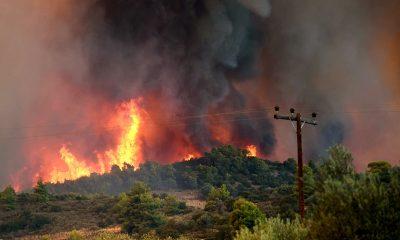 В Греции на острове Эвия 23 августа вспыхнул новый лесной пожар - Фото